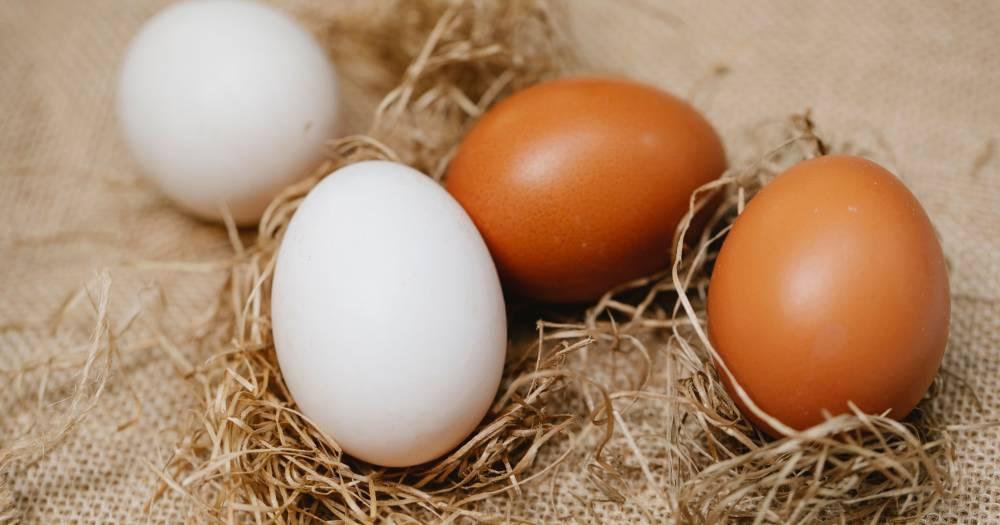 Telur Ayam Kampung VS Telur Ayam Biasa, Yang Mana Lebih Berkhasiat?