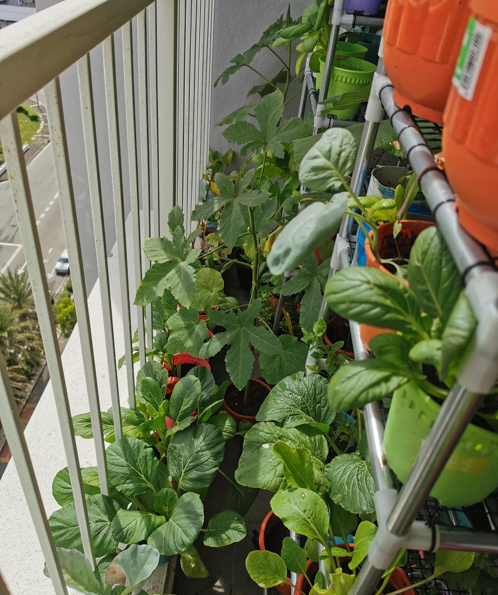 Wanita Ini Bagi Tip Berkebun Secara Organik Di Balkoni Tingakat 10, Memang Subur 2
