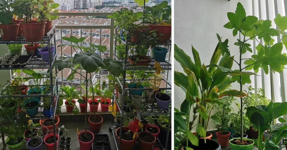 Wanita Ini Bagi Tip Berkebun Secara Organik Di Balkoni Tingakat 10, Memang Subur