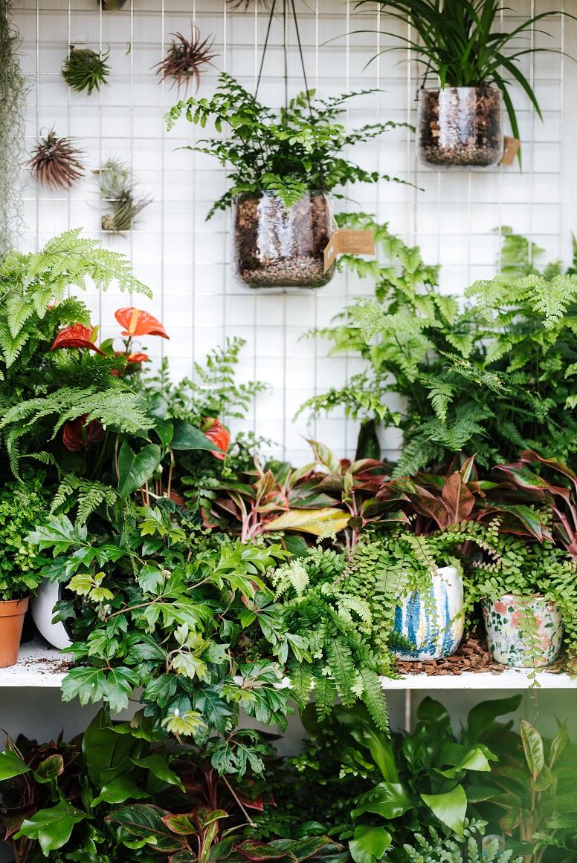 4 Langkah Untuk Selamatkan Pokok Yang Dah Layu Dan Kering Untuk Terus Hidup 2