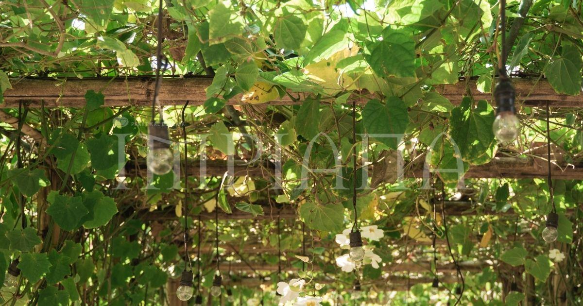 Cara Buat Sokongan Untuk Tumbuhan Perennial Atau Memanjat