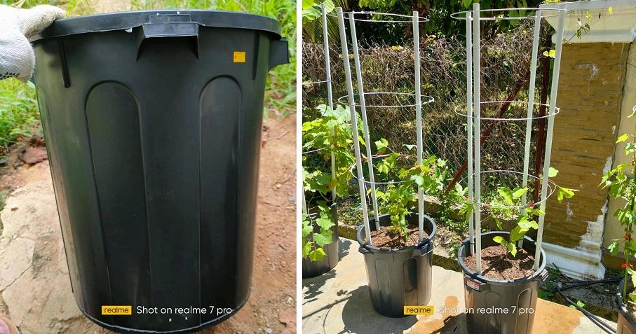 Menjadi, Tanam Pokok Anggur Dalam Tong Sampah Plastik
