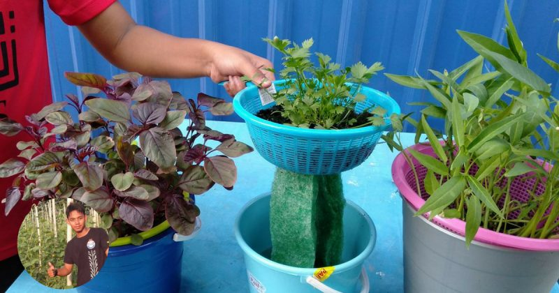 Petani Muda Ini Tunjuk Cara Tanam Macam-macam Jenis Sayur Tanpa Perlu Siram Hari-Hari