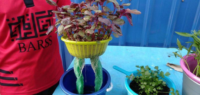 Petani Muda Ini Tunjuk Cara Tanam Macam-macam Jenis Sayur Tanpa Perlu Siram Hari-Hari 6