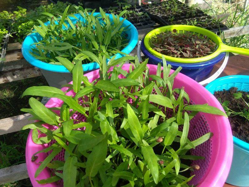 Petani Muda Ini Tunjuk Cara Tanam Macam-macam Jenis Sayur Tanpa Perlu Siram Hari-Hari 2