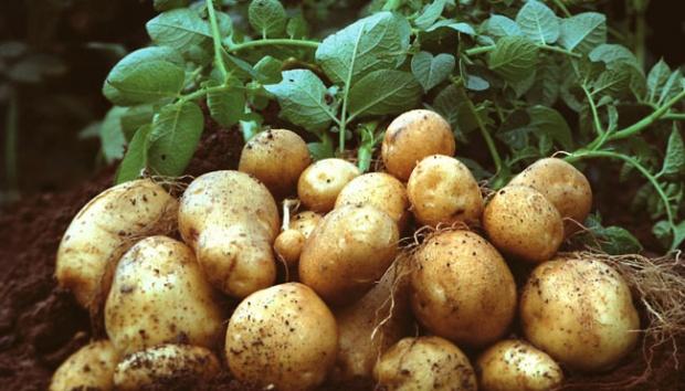 Ini 6 Jenis Sayur Umbisi Yang Mudah Di Tanam Dalam Pasu 8