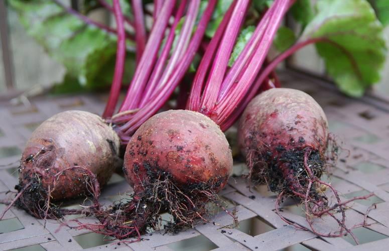 Ini 6 Jenis Sayur Umbisi Yang Mudah Di Tanam Dalam Pasu 12