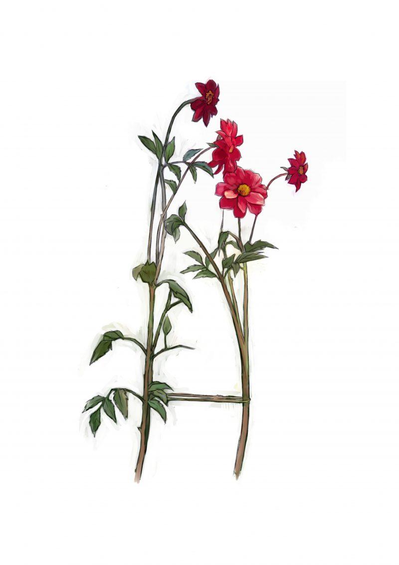 Cara Buat Sokongan Untuk Tumbuhan Perennial Atau Memanjat 2