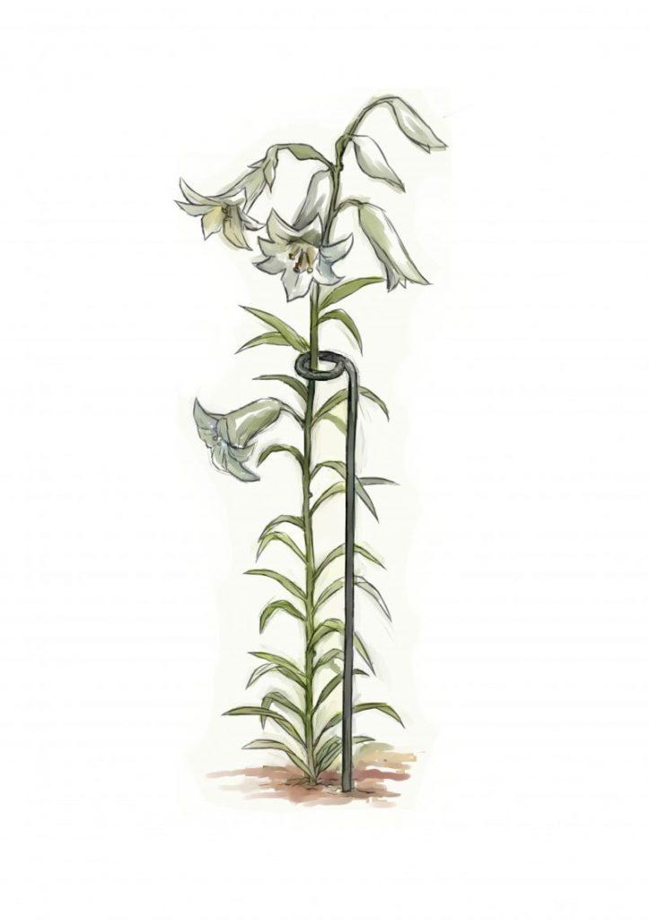Cara Buat Sokongan Untuk Tumbuhan Perennial Atau Memanjat 8