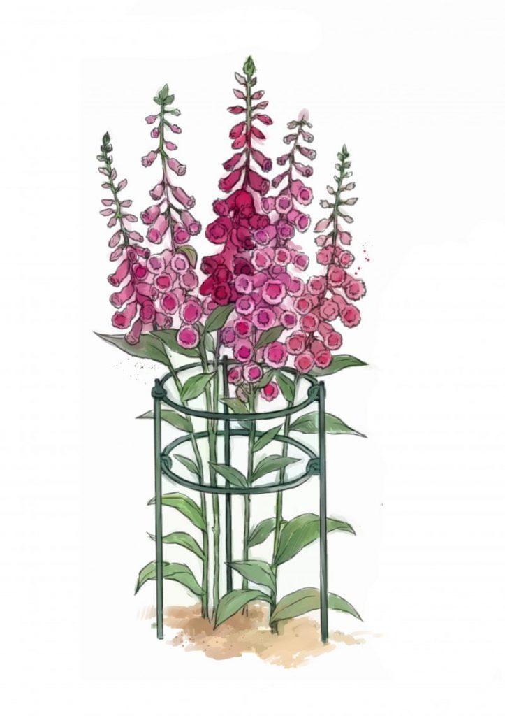 Cara Buat Sokongan Untuk Tumbuhan Perennial Atau Memanjat 4