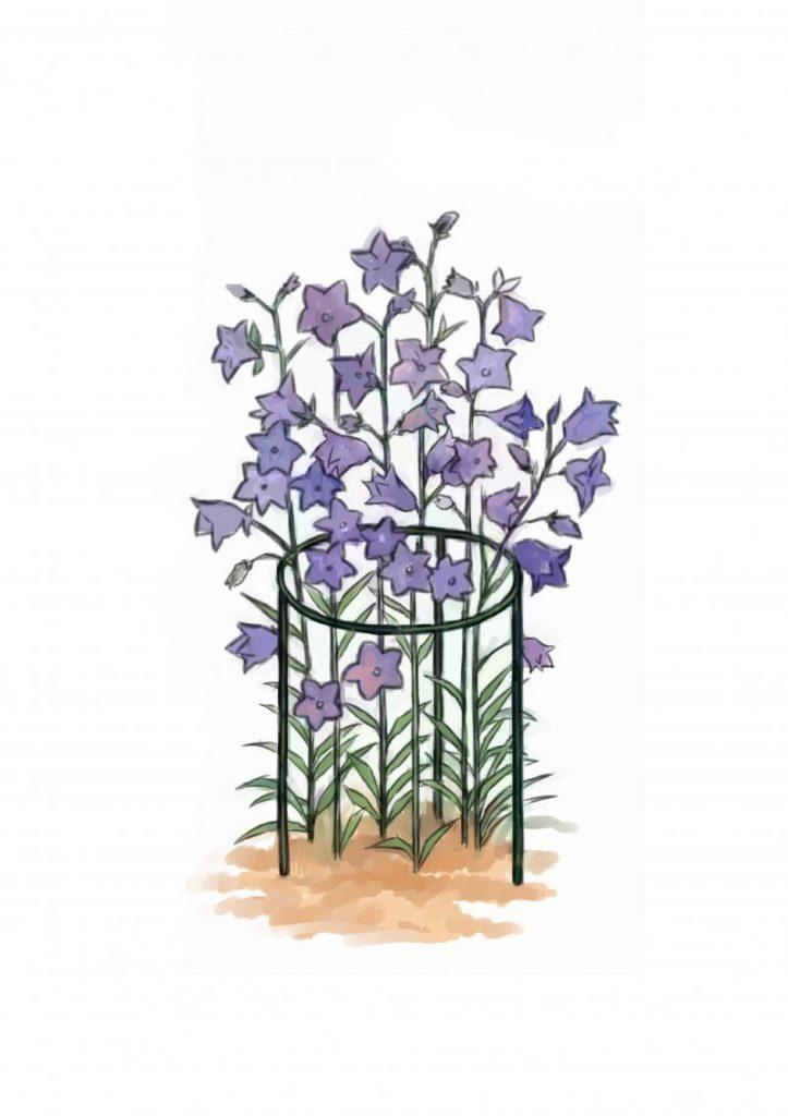 Cara Buat Sokongan Untuk Tumbuhan Perennial Atau Memanjat 6