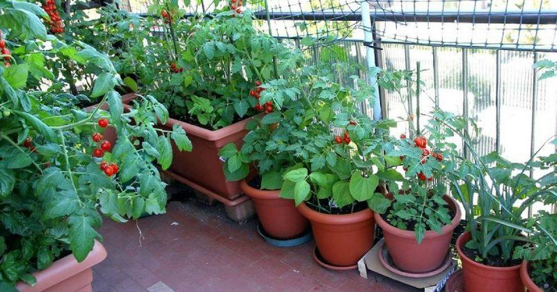 10 Tip WAJIB Tahu Untuk Yang Baru Nak Mula Bina Kitchen Garden