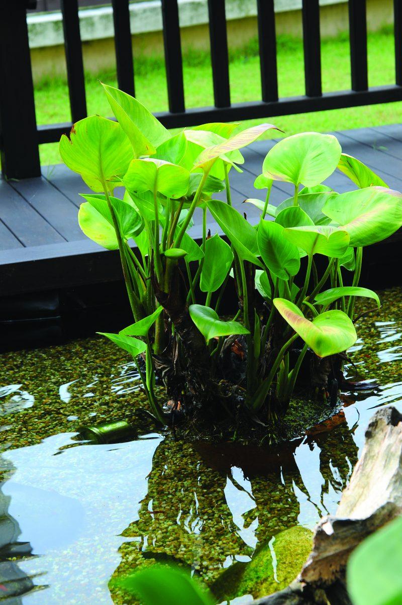 (GAMBAR) Bina Kolam Dengan Kedalaman 2 Kaki Menggunakan Pond Liner Hasilnya Lebih Menarik 20