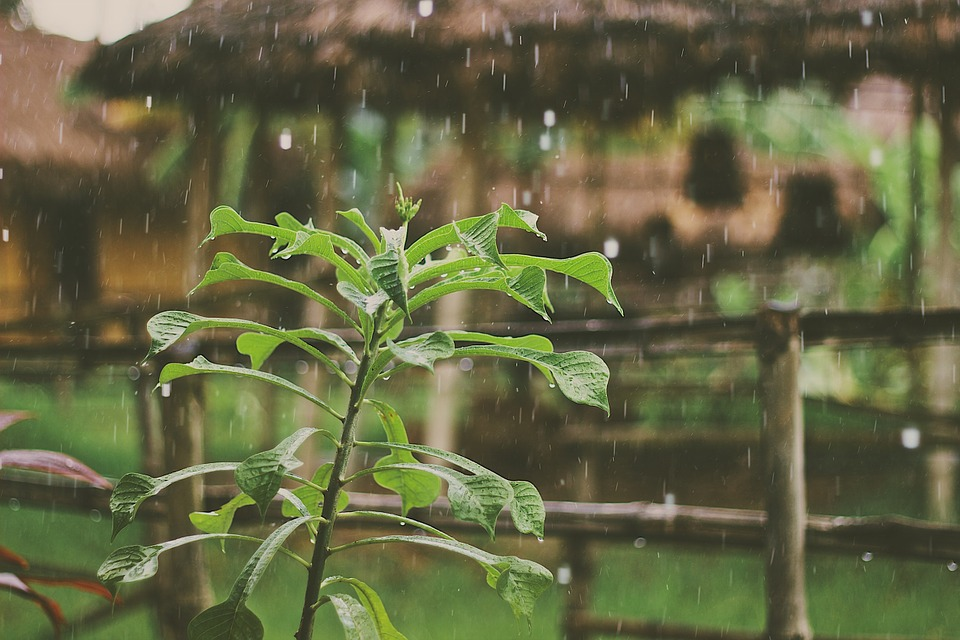 8 Perkara Yang Wajib Anda Lakukan Untuk Jaga Pokok Ketika Musim Hujan