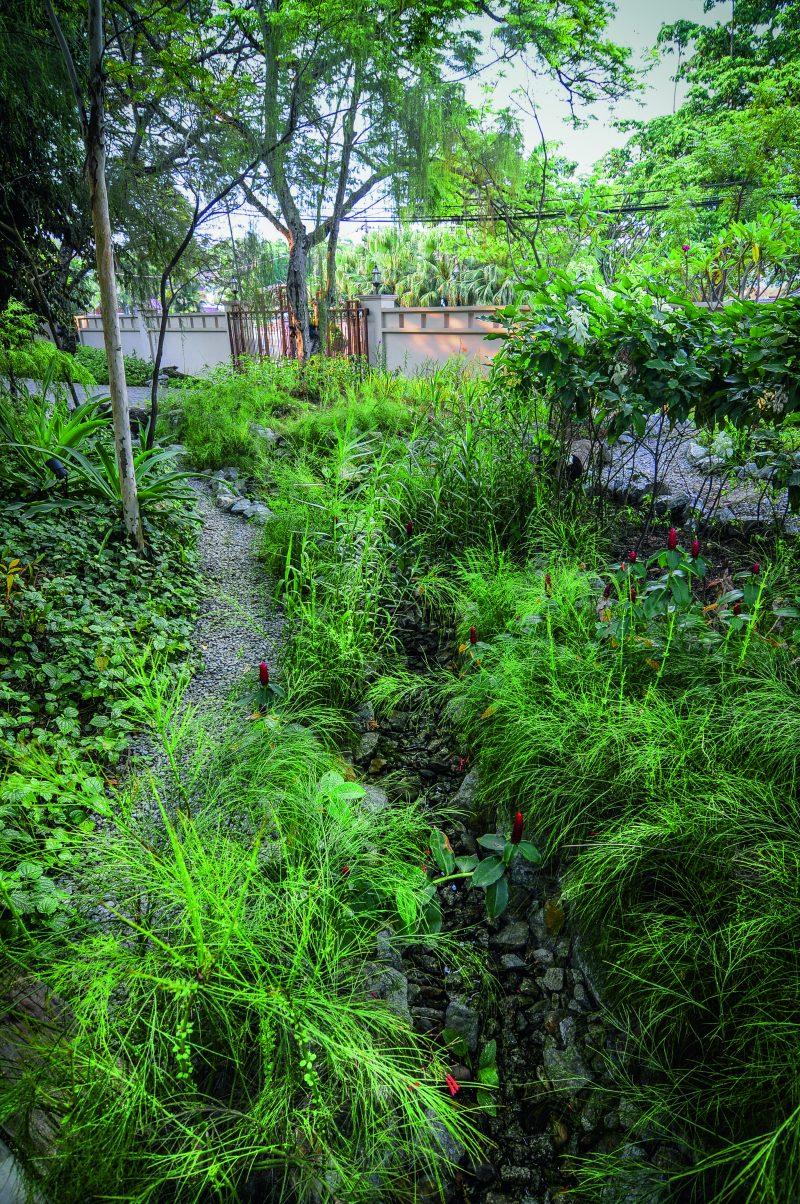 """(GAMBAR) Pilih Pokok Hutan Untuk Hasilkan Laman Mewah Dan """"Less Maintenance"""" 8"""