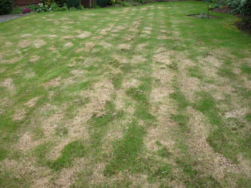 Selain Kaedah Penanaman Yang Salah, Ini Mungkin Penyebab Rumput Di Laman Anda Tidak Menjadi 4