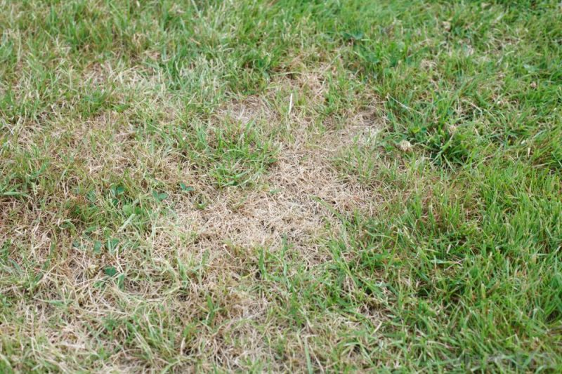 Selain Kaedah Penanaman Yang Salah, Ini Mungkin Penyebab Rumput Di Laman Anda Tidak Menjadi 2