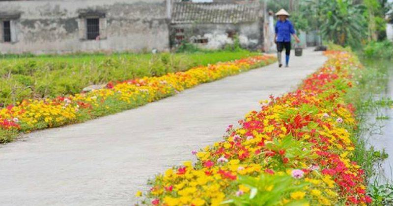 Download 54 Koleksi Gambar Bunga Ros Jepun HD Terbaru