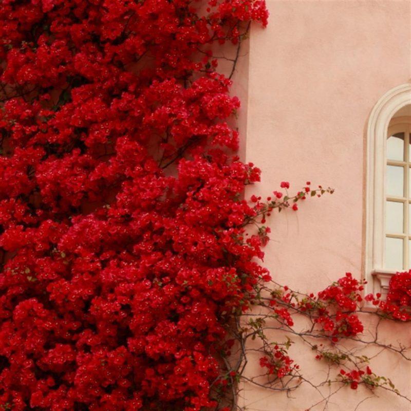 8 Cara Ini Boleh Buat Bunga Kertas Anda Mabuk Bunga 3