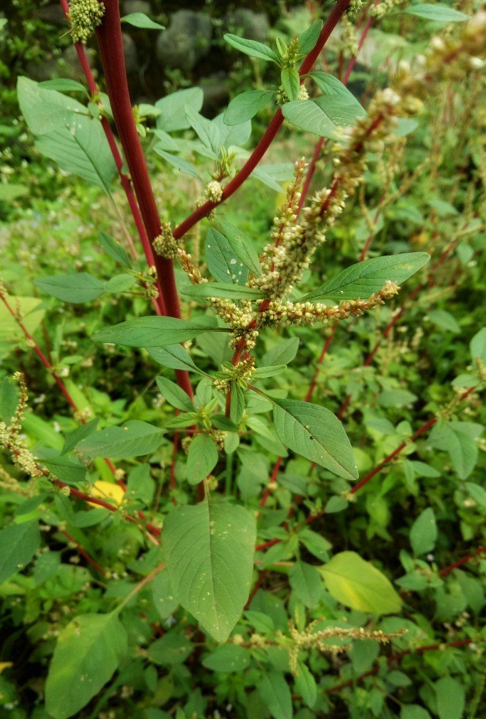 6 Jenis Tanaman Berupaya Hapuskan Serangga Perosak Dan Nyamuk Dari Rumah 5