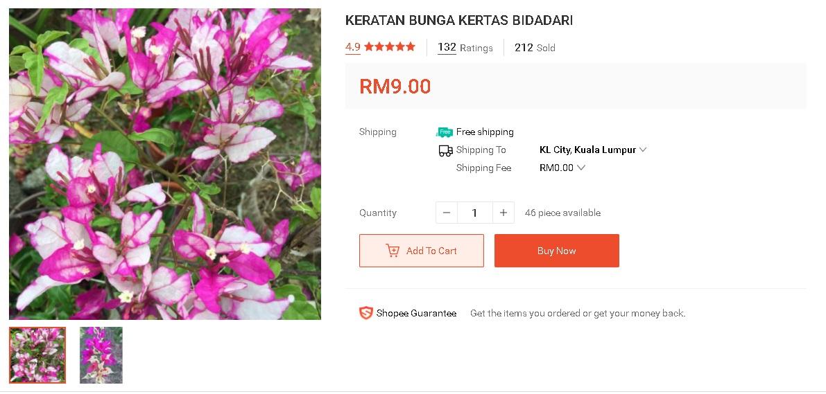 """Pokok Bunga Kertas Unik Dan """"Rare"""" Yang Boleh Beli Online Dari """"Trusted Seller"""" 5"""