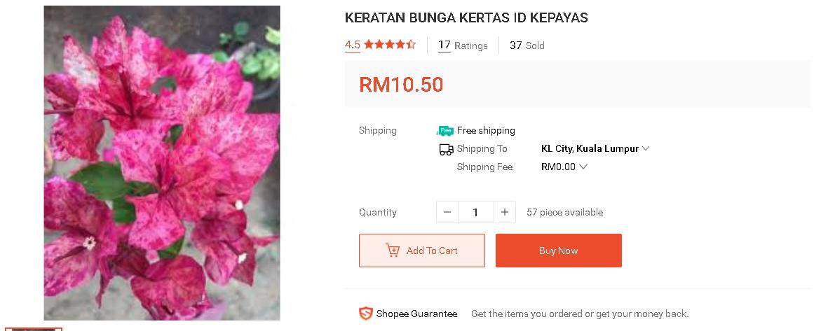 """Pokok Bunga Kertas Unik Dan """"Rare"""" Yang Boleh Beli Online Dari """"Trusted Seller"""" 7"""